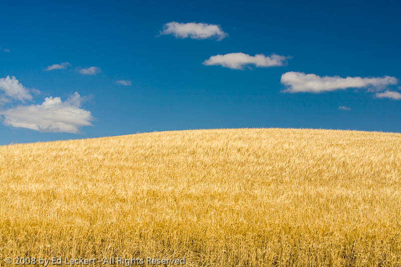Palouse Wheat Fields, The Palouse, Idaho