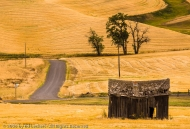 Old Shed on the Side of the Road, The Palouse, Washington