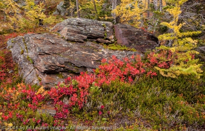 Fall Color on the Rock, Larch Lake, Alpine Lakes Wilderness, Washington