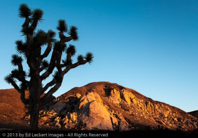 Joshua Tree Silhouette, Joshua Tree National Park, California