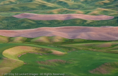Palouse Farmland, The Palouse, Washington