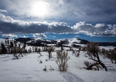 Winter Sun, Yellowstone National Park, Wyoming
