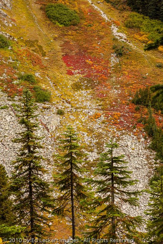 Fall Color on the Trail, Okanogan National Forest, Washington