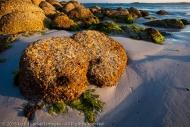 Low Tide at the Beach, Mount William National Park, Tasmania, Australia