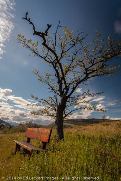 The Bench, Mosier, Oregon