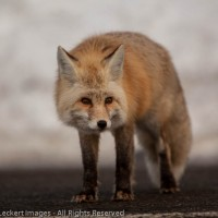 Don't Feed the Wildlife – Really!