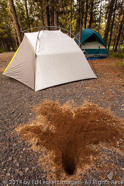 Hole and Tent, Omatilla National Forest, Oregon