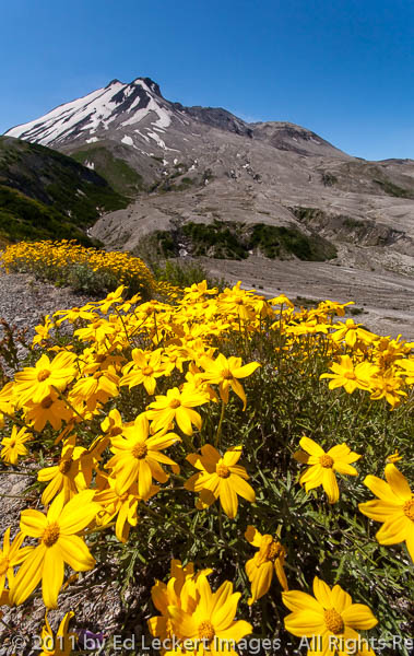 Color on the Trail, Mount St. Helens National Volcanic Monument,