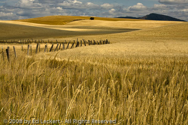 Palouse Fence, The Palouse, Washington