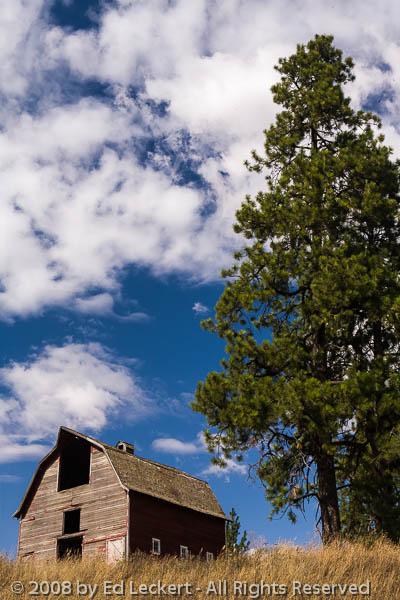 Barn and Tree, The Palouse, Washington