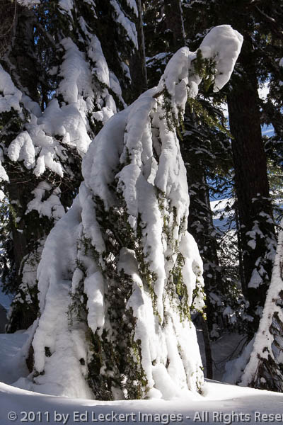 Snow Ghost, Mount Rainier National Park, Washington
