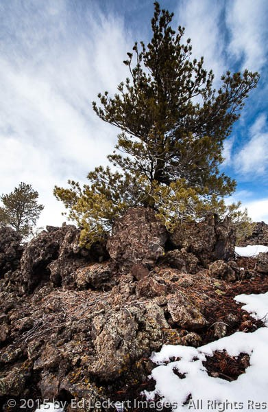 Tree in Volcanic Rock, Craters of the Moon National Monument, Id