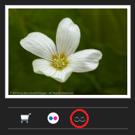 500px Licensing Button