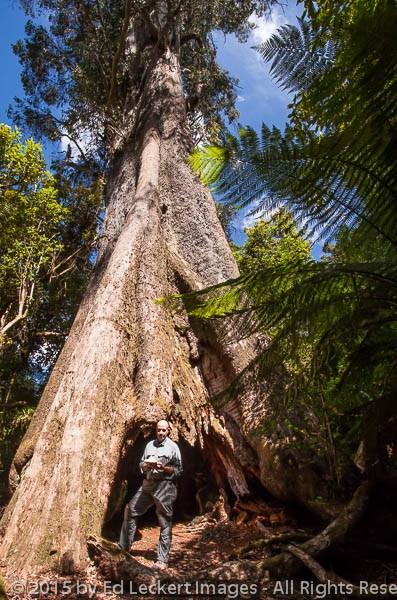 Ed and the Blue Tier Giant, Tasmania, Australia