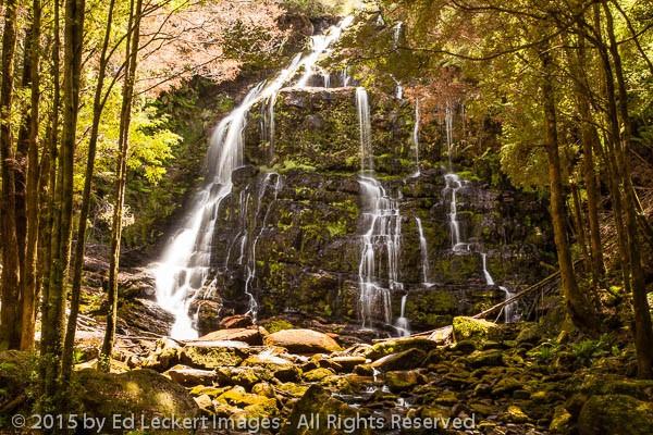 Nelson Falls, Lyell Highway, Tasmania, Australia