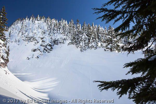 Slopes Above Paradise, Mount Rainier National Park, Washington