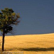 Shadow, The Palouse, Washington