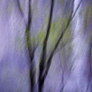 Abstract of Tree and Waterfall, Yosemite National Park, California