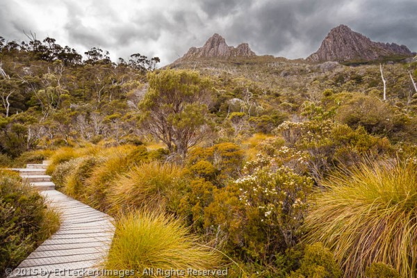 Beneath the Cradle, Dove Lake Circuit, Cradle Mountain-Lake St Clair National Park, Tasmania, Australia