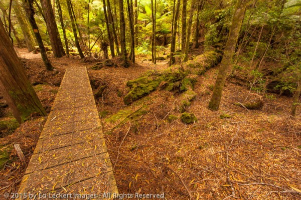 Boardwalk along the Huon Pine Walk, Corinna, Tasmania, Australia