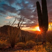 Desert Sunset, Saguaro National Park, Arizona