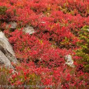 Fall Color on the Maple Pass Loop, Okanogan-Wenatchee National Forest, Washington