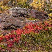 Fall Color on the Rock, Larch Lake, Alpine Lakes Wilderness, Washington