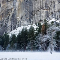 Fog on Snowfield, Yosemite National Park, California