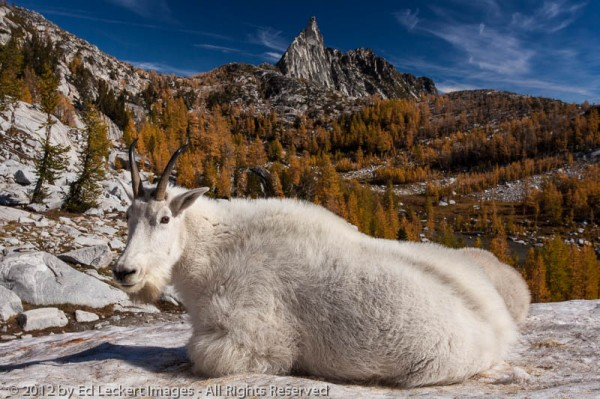 Goat and Prusik Peak, Alpine Lakes Wilderness, Washington