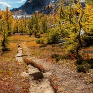 Hike of the Larches, Alpine Lakes Wilderness, Washington