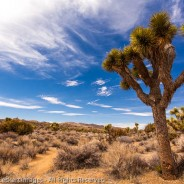 Joshua Tree Landscape, Joshua Tree National Park, California