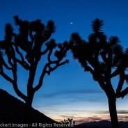 Moon over the Desert, Joshua Tree National Park, California