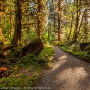 Rainforest Trail, Olympic National Park, Washington