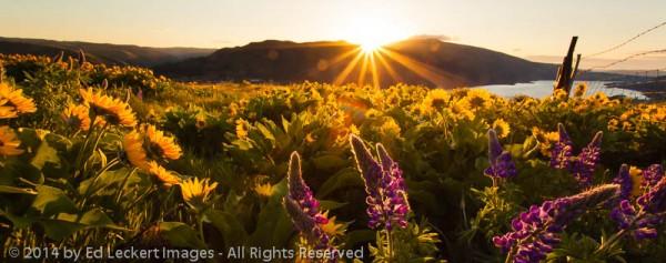 Rowena Crest Sunrise, Mayer State Park, Oregon