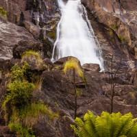 Saint Columba Falls, Saint Columba Falls State Preserve, Tasmania, Australia