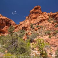 Sandstone Cliffs, Red Cliffs National Conservation Area, Utah