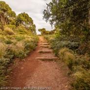 Steps Through Paradise, The Nut State Reserve, Tasmania, Australia