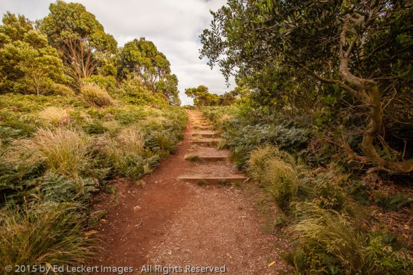 Steps Through Paradise, The Nut State Reserve, Tasmania, Australia