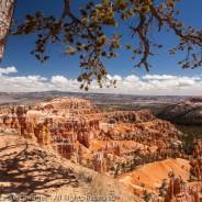 Tree and Canyon, Bryce Canyon National Park, Utah