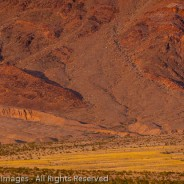 Desert Bloom at Ashford Junction, Death Valley National Park, California