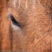 Eye of the Horse, Snaefellsnes Peninsula, Iceland