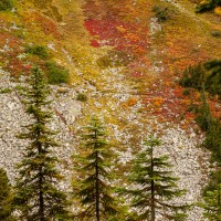 Fall Color on the Trail, Okanogan National Forest, Washington