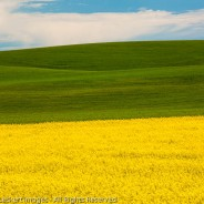 Palouse Layers, The Palouse, Washington