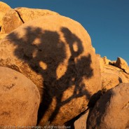 Rock Art, Joshua Tree National Park, California