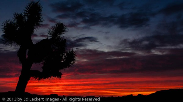 Sunrise at Jumbo Rocks, Joshua Tree National Park, California