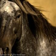 Watchful, The Palouse, Idaho